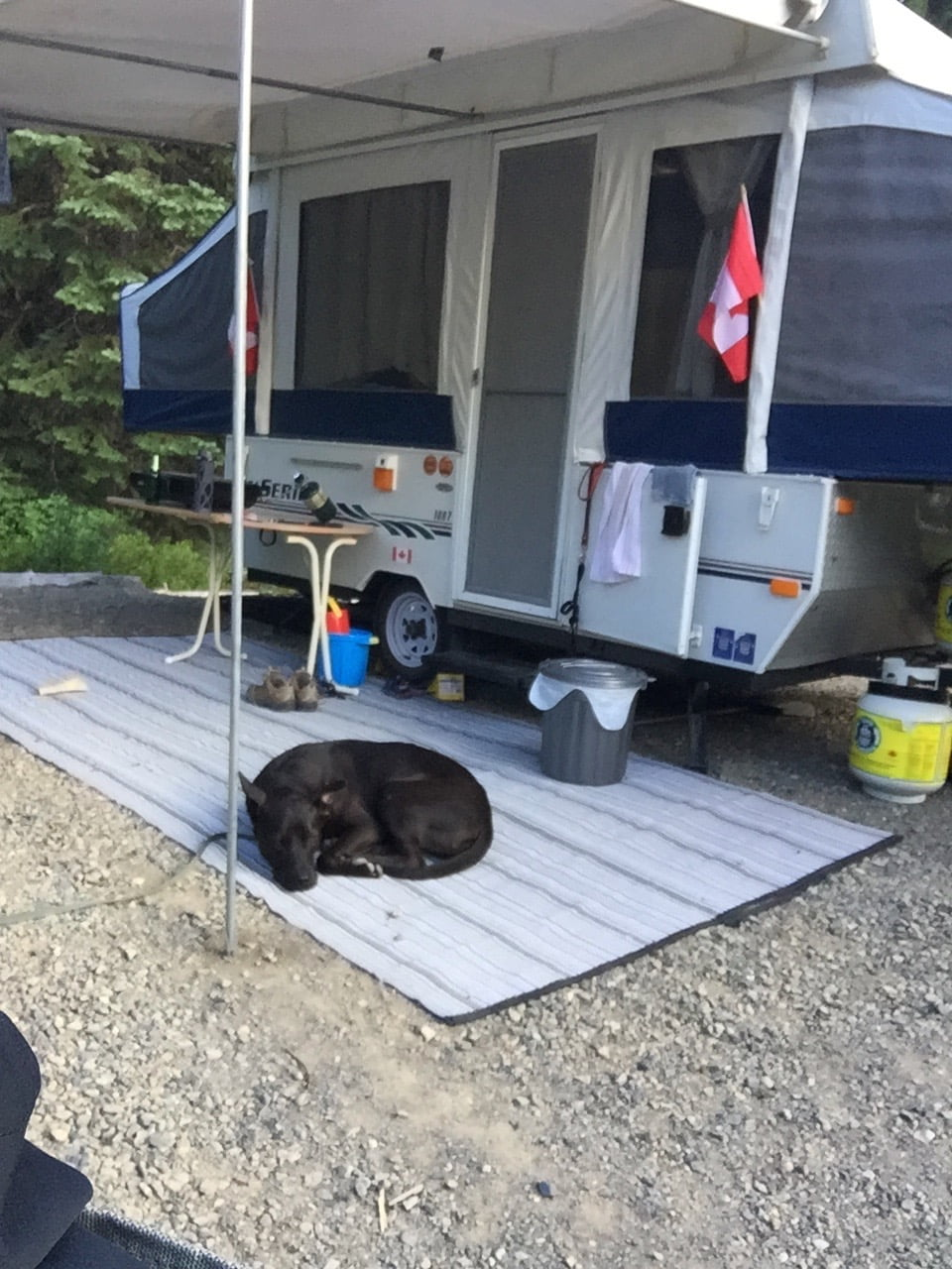 Dog Sleeping while Camping in Front of Tent Trailer