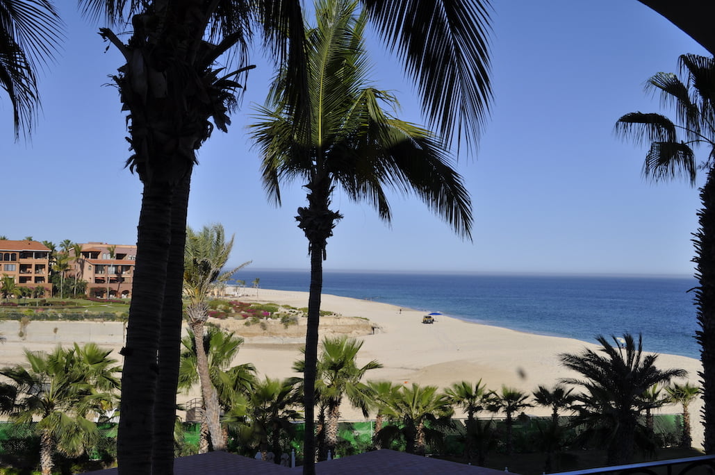 View of Beach through Palm Trees in Los Cabos, Mexico