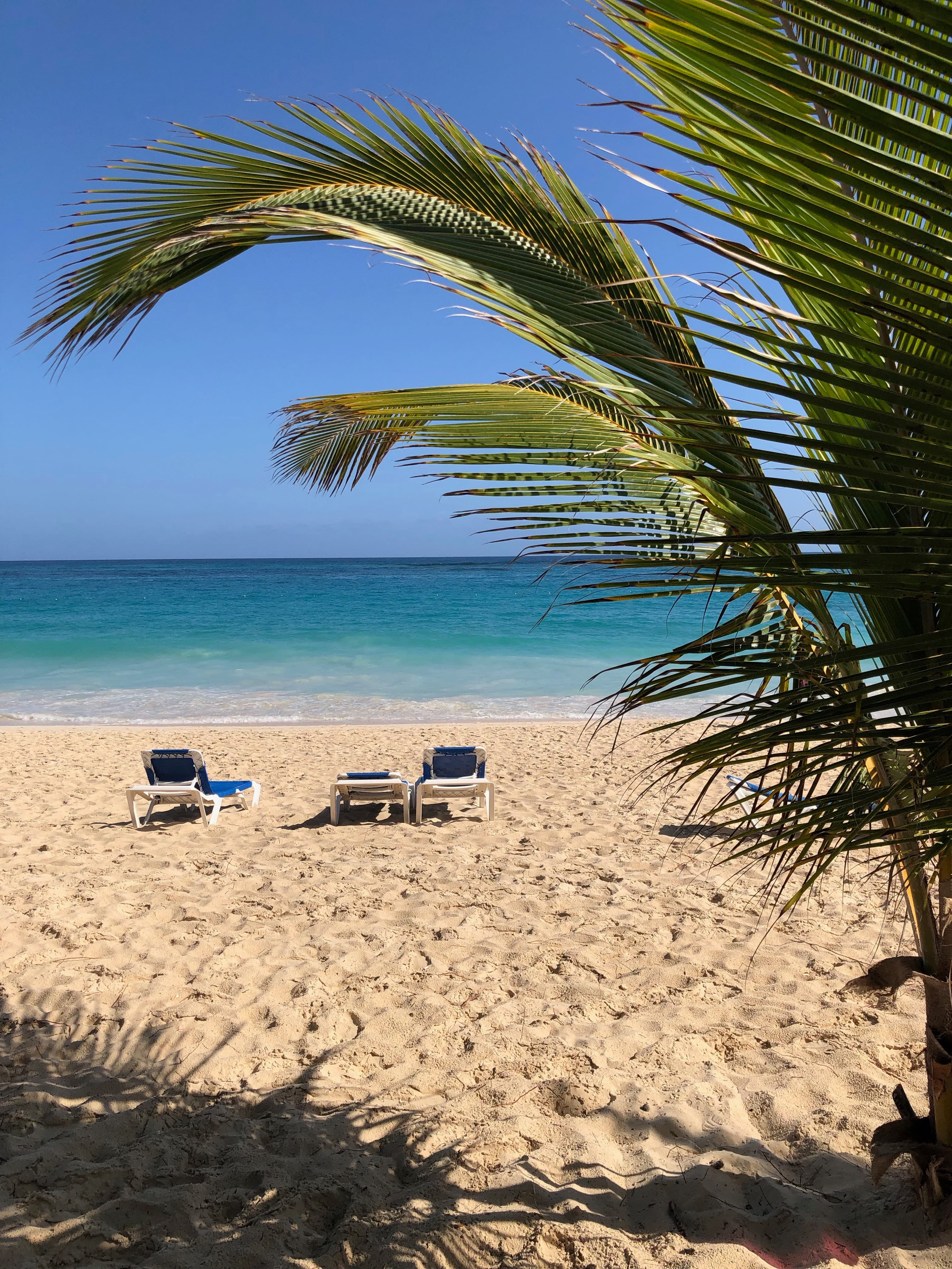 View of Beach through Palm Trees in Dominican Republic