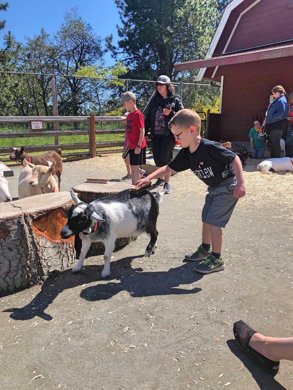 Beacon Hill Children's Farm Goats
