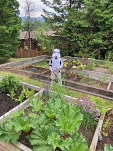 Pre-Schooler dressed as Storm Trooper at Garden
