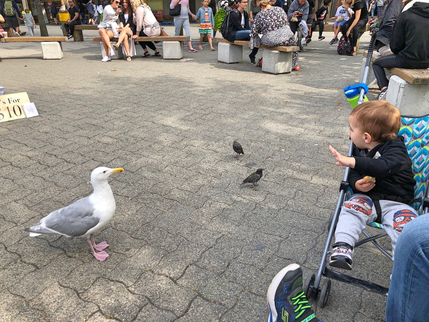 Toddler and Greedy Birds at Granville Island