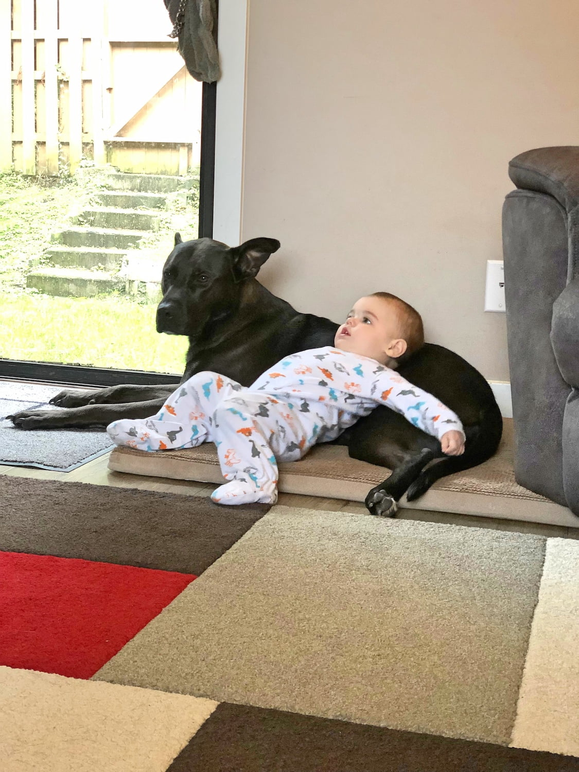 Black Lab Cross Chilling with Baby