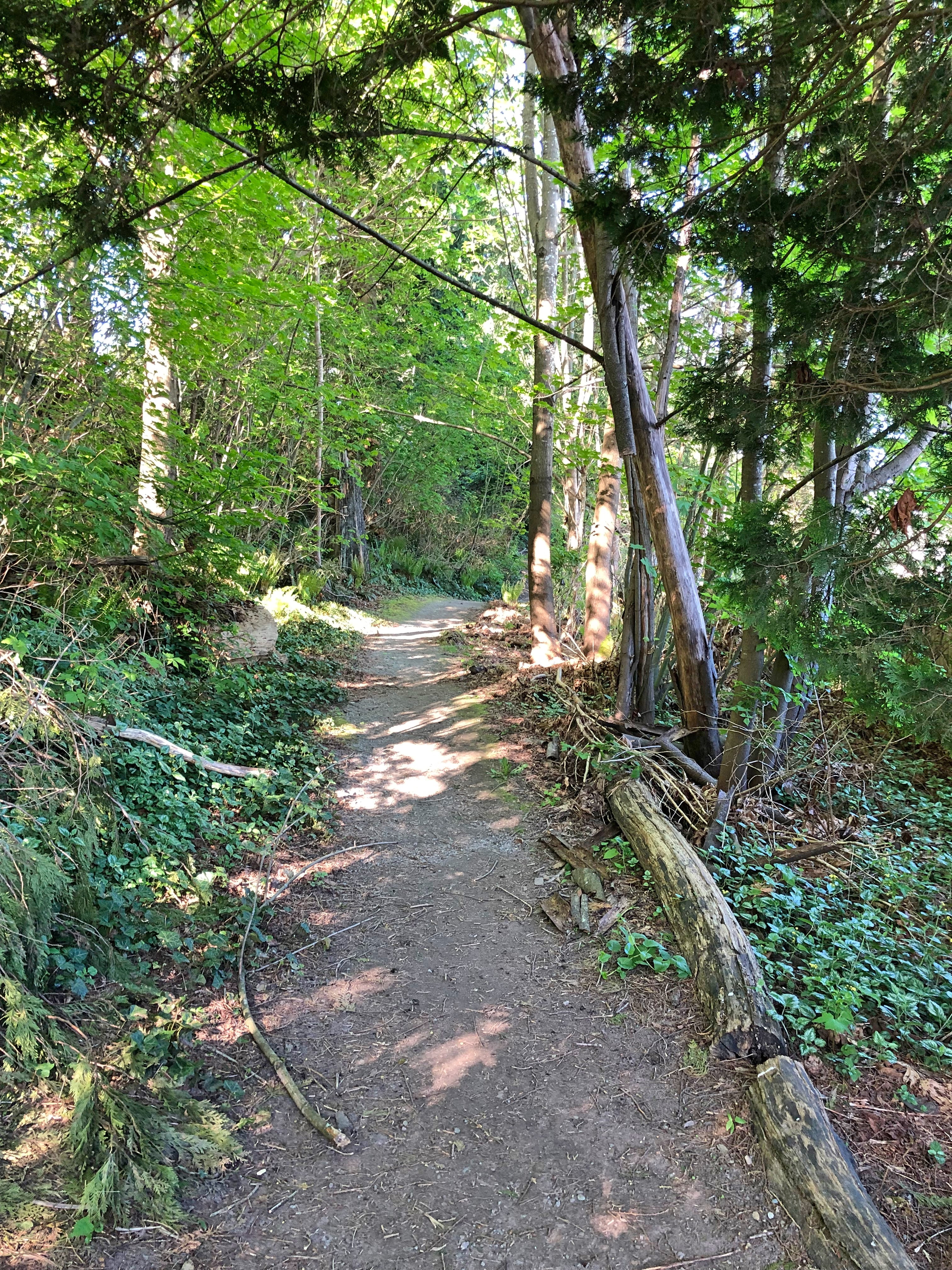 Trail in the Trees - Port Moody