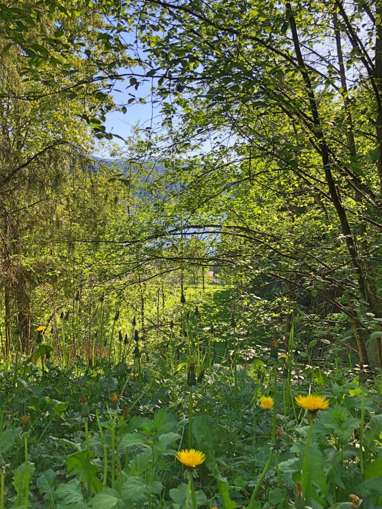 Wildflowers and Trees - Port Moody