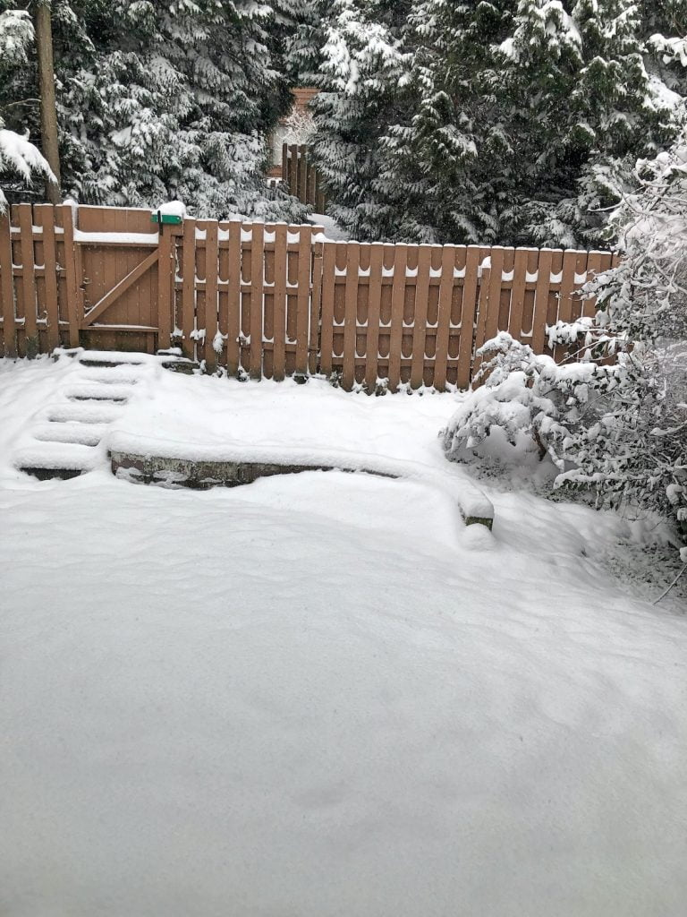 Snowy Back Yard in Port Moody