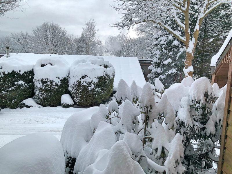 Snow + Poetry