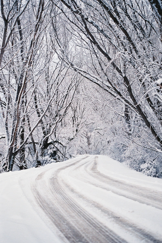 Snowy Tree-Lined Street - Photo by Ben Parker (Unsplash)
