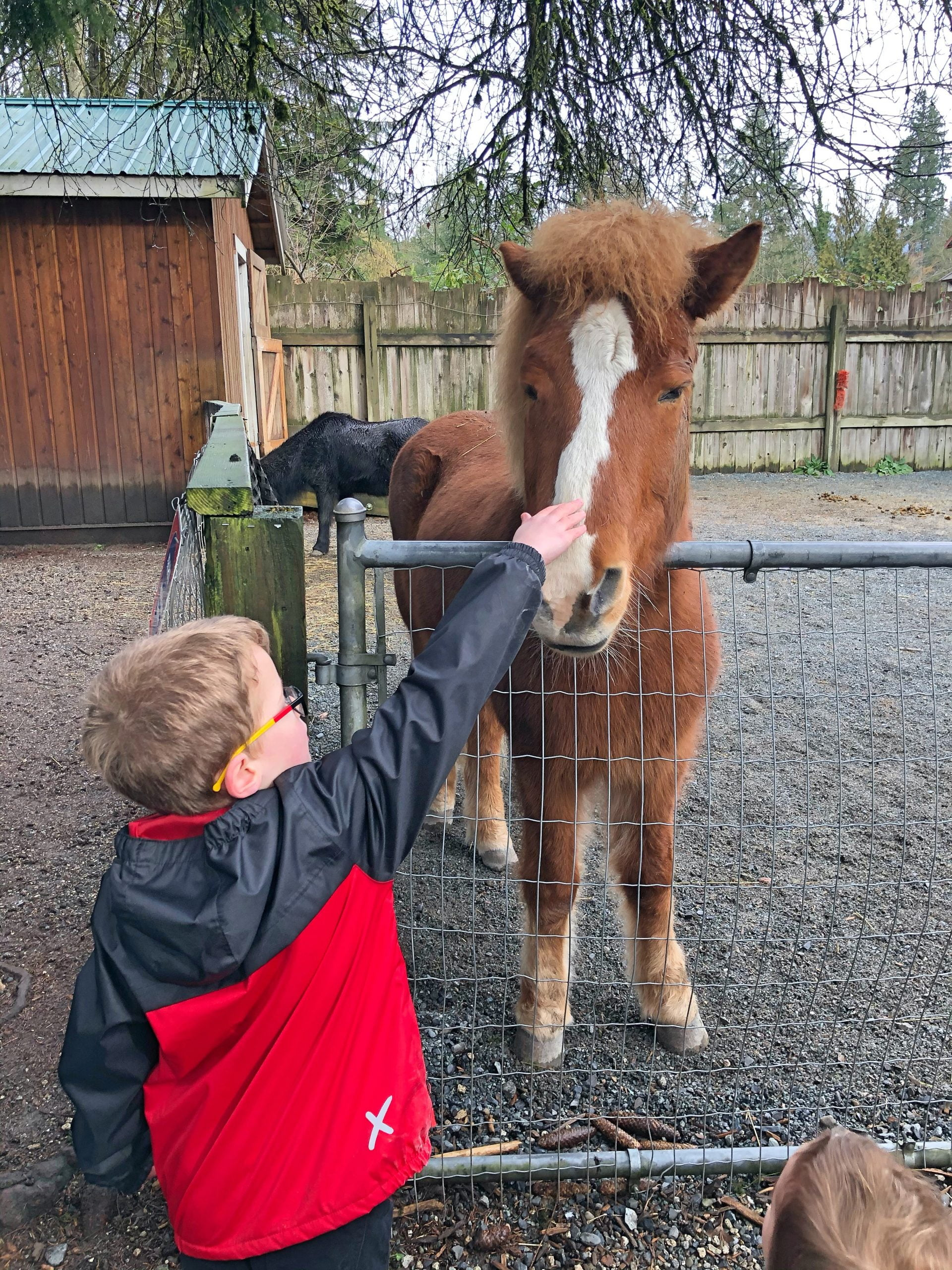 Petting the Horse at Maplewood Farm