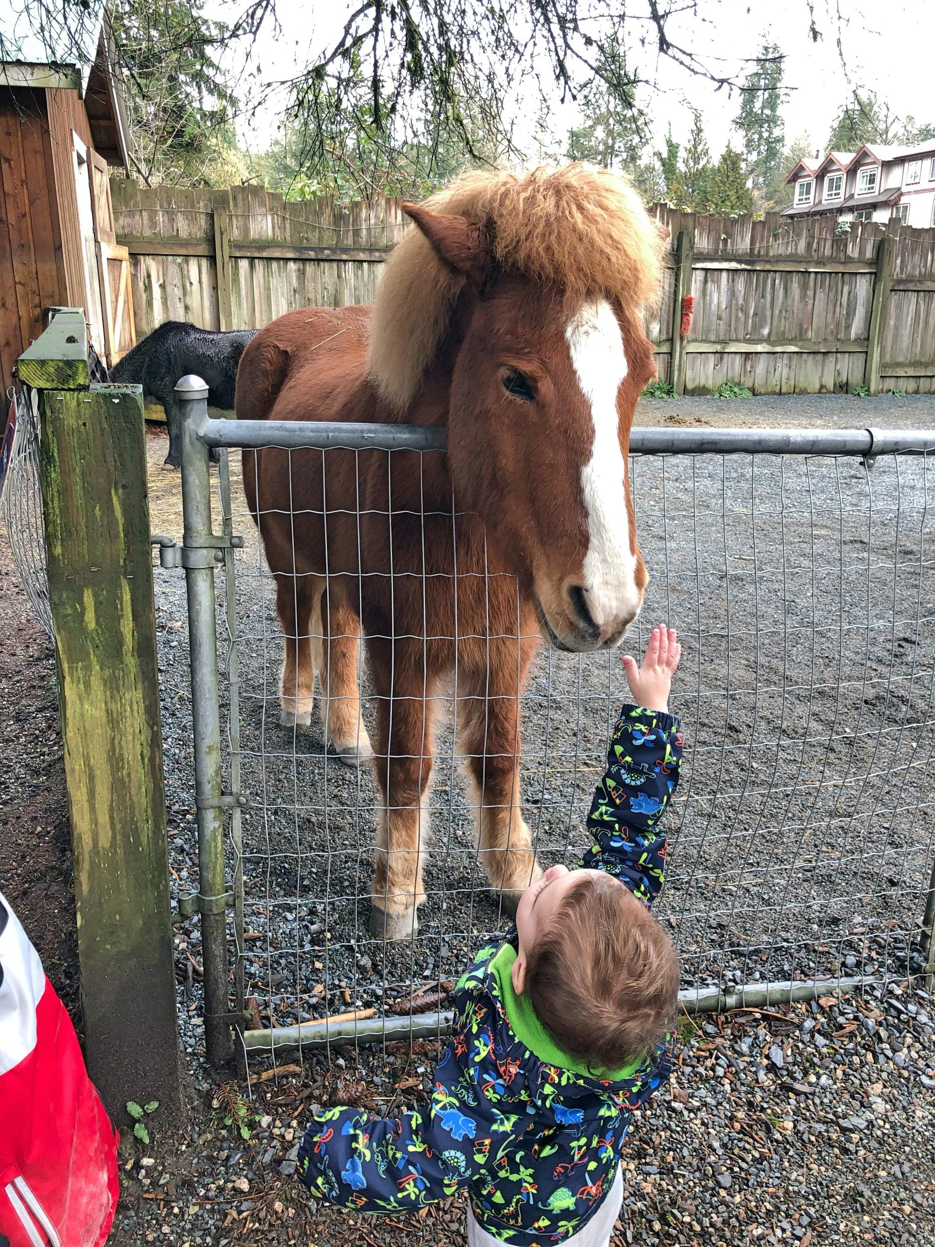 Reaching to Pet the Horse at Maplewood Farm