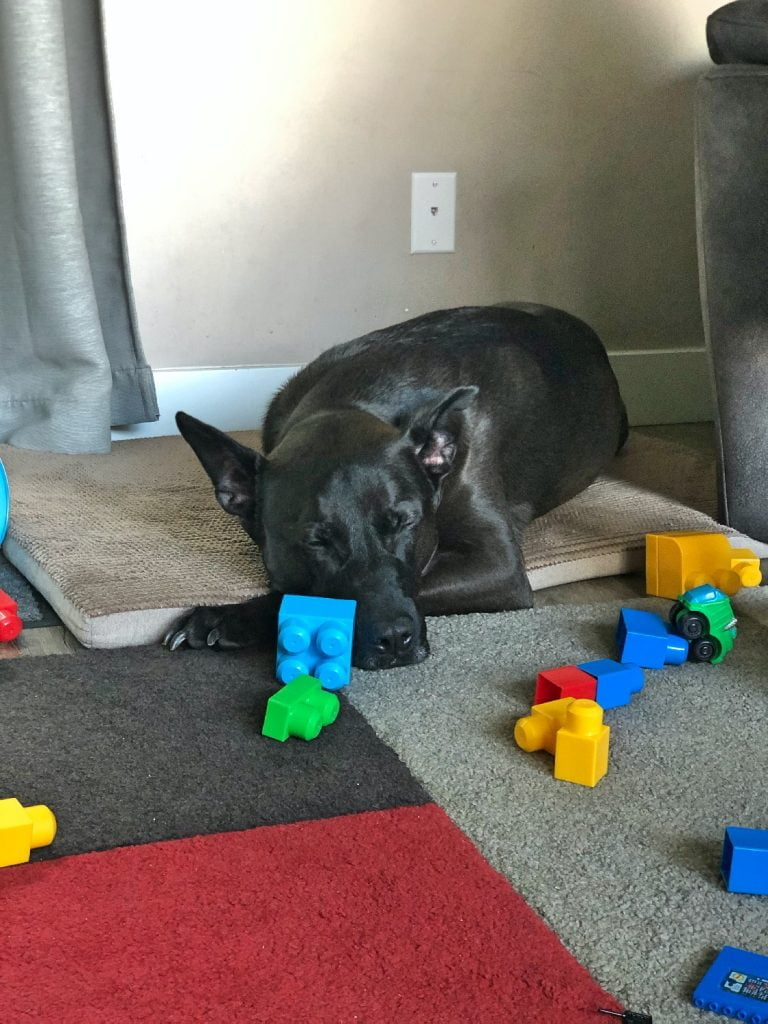 Dog Sleeping Near Lego Blocks