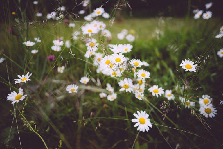 Summer Flowers by Niklas Veenhuis on Unsplash