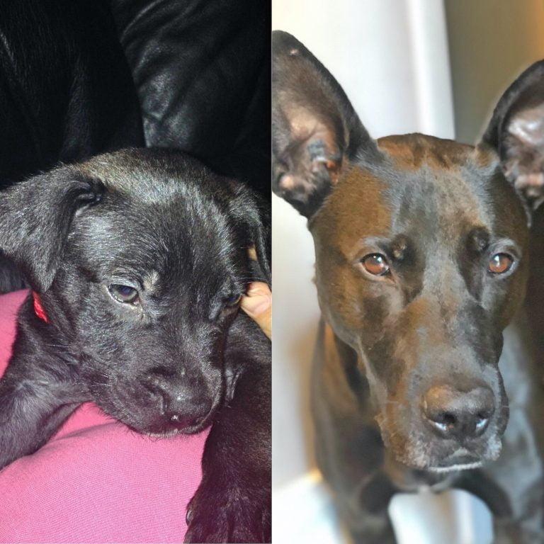 Eddie Dog Comparison - Puppy v 6 Year Old