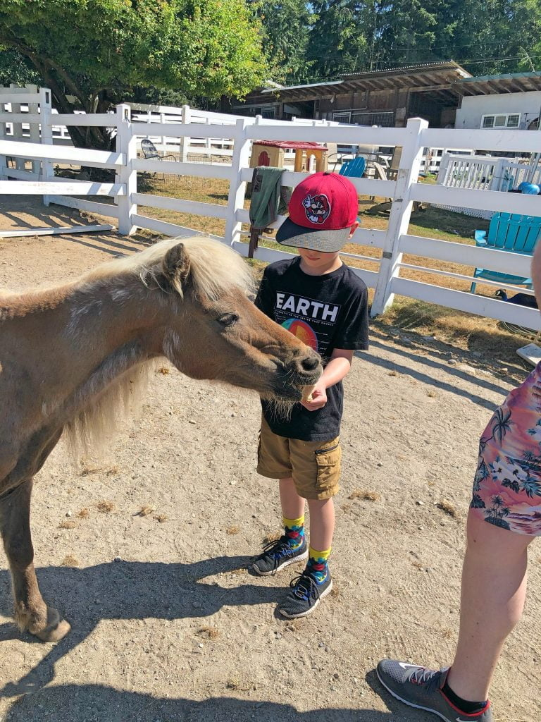 Farm Ventures - Kid Feeding Pony