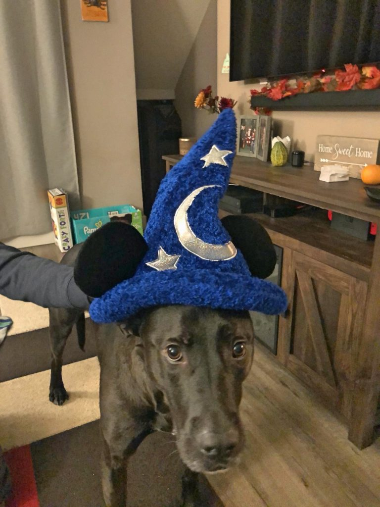 Dog Wearing Mickey Wizard Hat