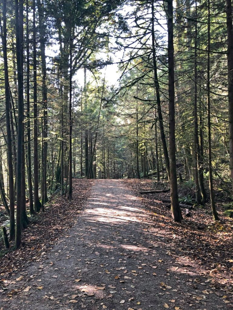 Gravel Trail Through Tall, Skinny Trees in Autumn