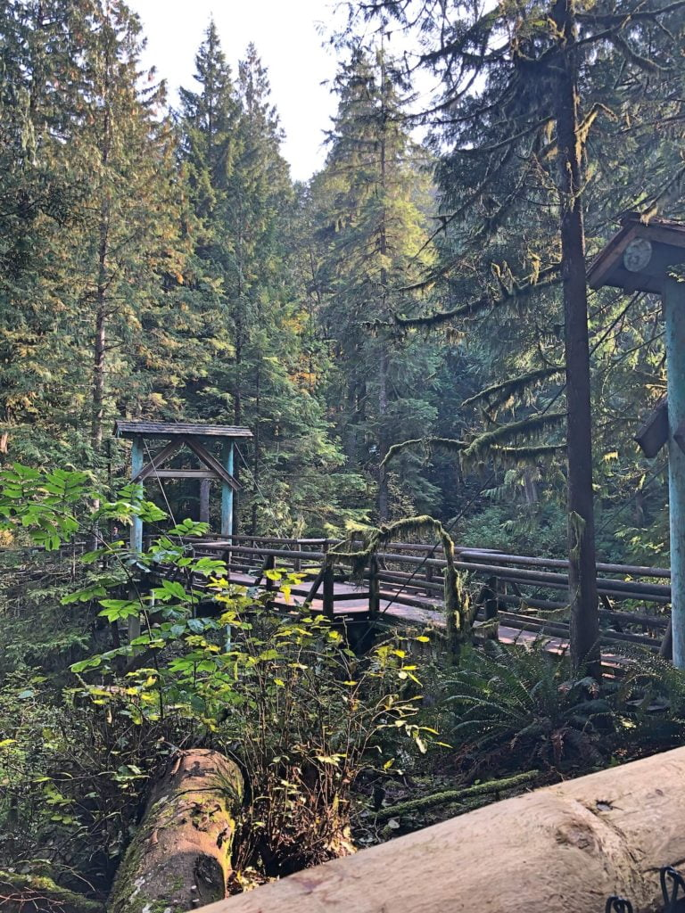 Wooden Foot Bridge Between Trees