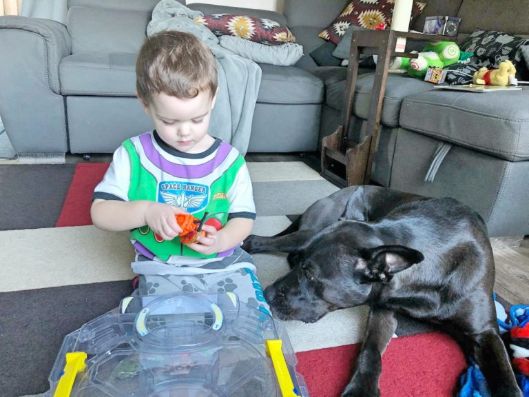 Toddler Playing Beyblades with Dog Nearby